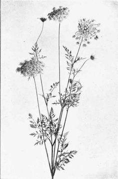 wildflower tattoos - Google Search