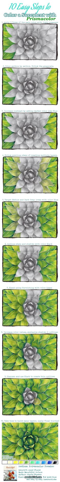 10 Easy Steps to Color a Succulent with Prismacolor. For more coloring tips, techniques and tricks visit Huelish Blog and download your free downloadable coloring page and color along!  #coloringtips #grayscalecoloring #adultcoloringbook #prismacolor #coloredpencils #beautifulnature #succulent #grayscale #coloringtechniques #grayscalecoloringbook #nicolestocker #coloringsteps