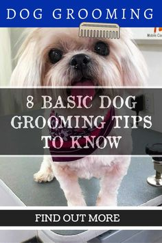 Taking Care of Your Pet – Dog Grooming Tips Mans Best Friend, Best Friends, Dog Grooming Tips, Dog Wash, Pet Dogs, Pets, Your Pet, Healthy, Image