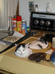 nobody turn on the oven!! This looks just like Heather's cat Bo!!!!!! lol