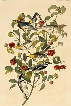 Love, love, love Audubon