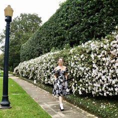 Azalea season in Houston - BethieLife Socks And Heels, Houston, Sidewalk, Seasons, Fashion, Tights And Heels, Moda, Fashion Styles, Side Walkway