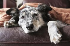 What Are the Symptoms of a Dog Dying from Kidney Failure?
