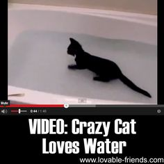❤ VIDEO: Crazy Cat Loves Water ❤   ►►http://lovable-cats.com/video-crazy-cat-loves-water/?i=p