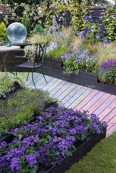 Fantastic color themed purple, lavender, blue garden with wooden rainbow walkway path, Heliotropium Scentropia Dark Blue heliotrope fragrant...
