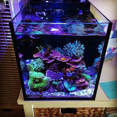 Late Saturday afternoon action #reefpack #reeftank #allmymoneygoestocoral…