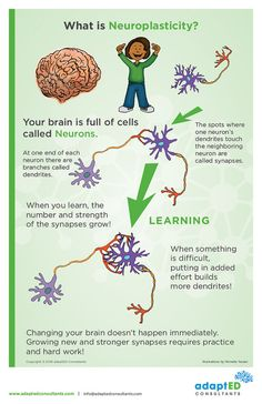 Plasticity Poster For Middle School and up Mental And Emotional Health, Social Emotional Learning, Social Skills, Brain Based Learning, Brain Facts, Brain Anatomy, Therapy Tools, Cbt Therapy, School Social Work
