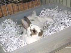 Lots of nifty rabbit tips such as how to toilet-train your rabbit/why it isn't working/what you can do if it isn't working!