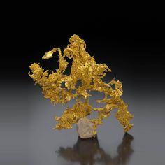 Gold - Eagle's Nest Mine (Mystery Wind Mine), Sage Hill, Michigan Bluff District, Placer Co., California, USA Size: 11.5 cm