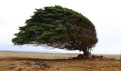 https://flic.kr/p/b2x1Fz | Tree