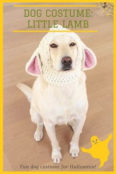 DIY little lamb dog costume! Sheep Costumes, Cute Dog Costumes, Dog Halloween Costumes, Scary Halloween, Crochet Dog Sweater, Cute Dog Photos, Halloween Crochet, Dog Crafts, Cute Dogs