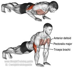 Close grip pushup. Targets your triceps brachii. Your pectoralis major and anterior deltoid act as synergists. Also known as narrow grip push up.