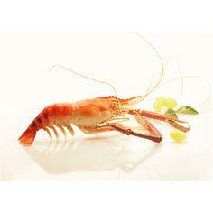 La Saphira aussi appelée 'macrobrachium rosenbergii' est une crevette surprenante, tant par sa taille que par sa culture en zone tropicale et en eau douce. #crevette #Saphira #shrimp #food