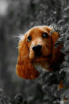 perro ojitos gif
