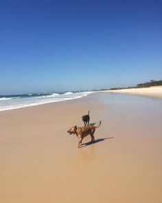 Today lily and ivy had an awesome beach walk at Fingal cutie dogsters