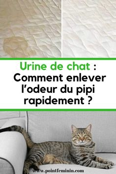 Urine de chat : Comment enlever l'odeur du pipi rapidement ? #urine #chat #odeur #matelas #tapis Pets Online, Life Care, New Tricks, Animals And Pets, How To Find Out, Diy, Point, Info, Technology News