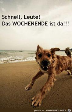 Besten Bilder Von Spruche In  Funny Sayings Humor Und Poems