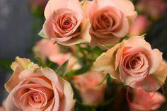 Spray Rose-Coral/Peach