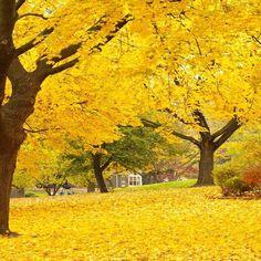 Autumn Yellow Park photo Backdrop - 7747 #AllThingsYellow