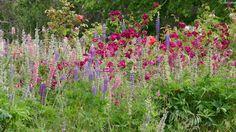 ╭•⊰✿ English Cottage Garden at Berry Farm, Hillwood, Tasmania  Photograph © Ellen Vaman www.facebook.com/ellen.vaman1 #EllenVaman #Photography #Tasmania #BerryFarm #Nature #Travel #tassiestyle