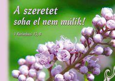 A szeretet soha nem múlik Love Is All, Verses, Life Quotes, Faith, Album, Rose, Flowers, Plants, Blog