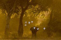 Flight of Angels by Vikram Ghanekar