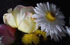 мои цветочки - null