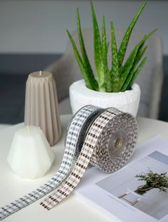 Ribbons, aloe vera, interior, design, home decoration