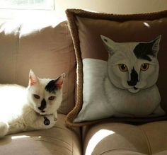 10 chic gifts for animal lovers ideas  chic gifts
