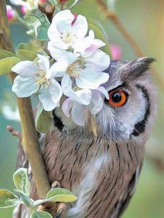 Owl peeking out from behind flowers.