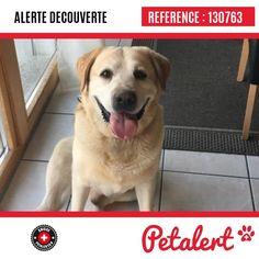 Dieser Alarm (130763) wird geschlossen; es ist nicht mehr auf der Plattform Petalert Schweiz sichtbar. Das Tier wurde in ein Heim gegeben Vielen Dank für Ihre Hilfe Labrador Retriever, Dogs, Animals, Switzerland, Platform, First Aid, Labrador Retrievers, Animales, Animaux