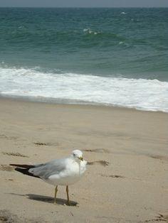 2010-08-02- Jersey Shore Summer. Long Branch Beach~House of History, LLC.
