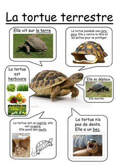 Fiche tortue terrestre Grade 2 Science, Preschool Science, Science Lessons, Science For Kids, Science Projects, Science And Nature, French Education, Kids Education, Teaching Kids