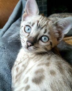 Our Kali says 'Meow Reddit.' http://ift.tt/2r6CN20