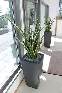 Easy and Fun Tips for Designing Your Indoor Garden living room - Having indoor plant decor may also House Plants Decor, Patio Plants, Indoor Planters, Outdoor Plants, Outdoor Gardens, Living Room Plants Decor, Plants Indoor, Indoor Gardening, Gardening Tips