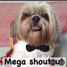 Want to win a shoutout that hundreds of thousands will see?! Here's your chance! Read below! 1. Follow all hosts: @the.black.pack @shaytoun_the_shihtzu @canadian.paws @ia.k9s @animal.features @thelifeofcocoandchloe @thatmuttmix @ranger.the.golden 2. Spam all hosts with likes and comments (the more you like/comment the better your ch…
