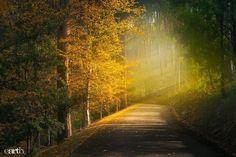 Mount Lofty Botanic Garden Adelaide South Australia pic: Ben Goode (fb)