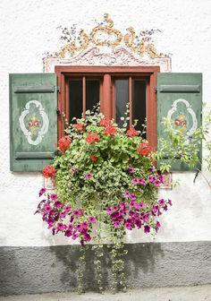 kwiaty_balkonowe_621x0_rozmiar-niestandardowy.jpg 621×885 pixels