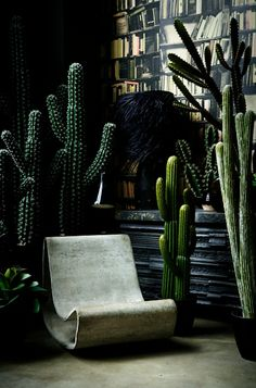 Bring the outdoors in. Cactus collection by http://abigailahern.com.