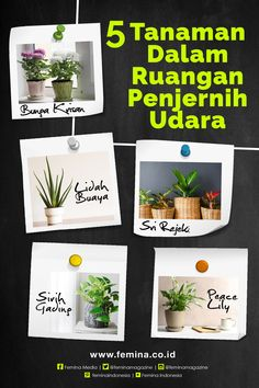 Home Discover 5 Indoor Plant Penjernih Udara Diy Home Crafts, Easy Home Decor, Home Decor Kitchen, Diy Room Decor, Home Room Design, Home Design Plans, Living Room Designs, House Design, House Plants Decor