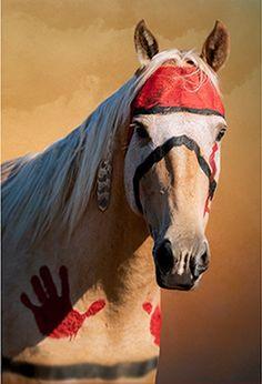 War pony Tomahawk; Apsáalooke
