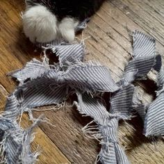 I made a toy for cat with unwanted clothes and she loves it!  #catsofinstagram #cattoy #upcycle #repurpose #recycle #sustainablefashionblogger #ethicalfashionstylist #diy #nyc #manhattan #ribbon #cat #zerowaste #zerowastewardrobeorganizing  #猫 #猫の手 #猫用おもちゃ #エシカルファッションブロガー #サステイナブルファッション #パーソナルスタイルコンサルタント #洋服整理術 #地球にも人にも優しいお洋服整理 #アップサイクル #リメイク #ニューヨーク