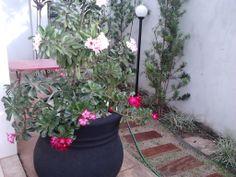 Jardim da minha irmã....