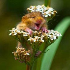 Animali che sorridono. FOTO: http://www.greenme.it/spazi-verdi/ethicme/1662