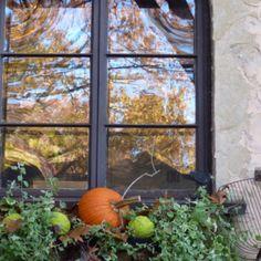 Fall window box.