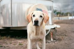 Guiness, one of the last remaining 9/11 search and rescue dogs, died on Friday. He was 14.