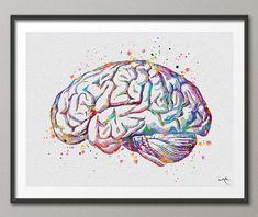 Brain Anatomy Watercolor Print Medical Art Science Art
