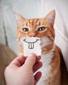 """""""ヘンな顔""""になっちゃった世界の猫たち【画像】"""