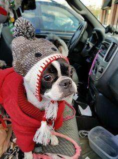 """When Mommy said 'Let's Go Shopping' didn't think we'd hafta wait in da car""...."