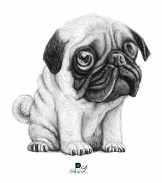 How awesome is this pug?  ・・・